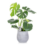 House Plant - Medium Grey Pot