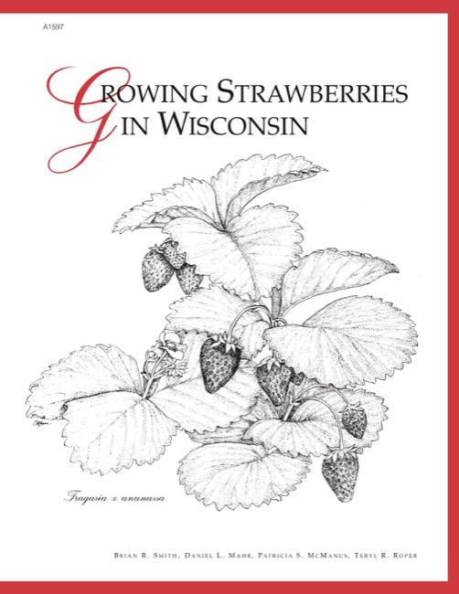 Growing Strawberries in Wisconsin