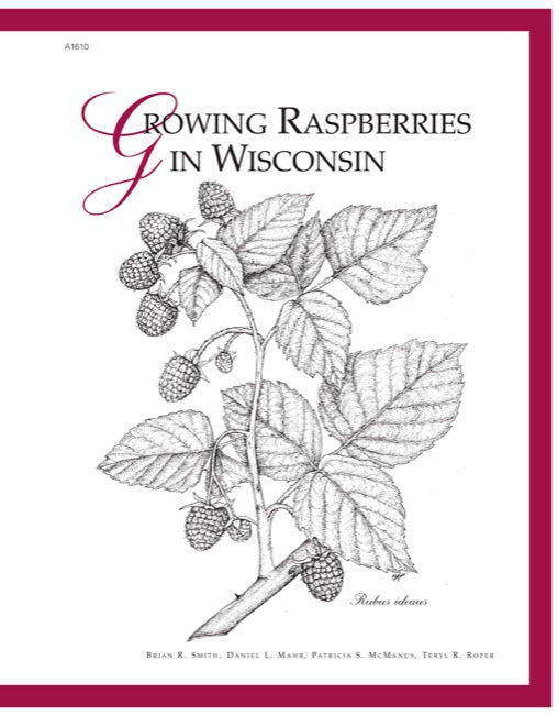 Growing Raspberries in Wisconsin