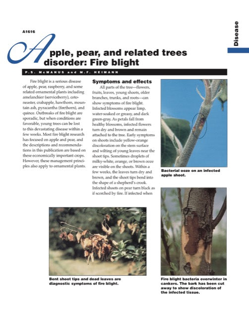 Apple, Pear, and Other Related Trees Disorder: Fire Blight