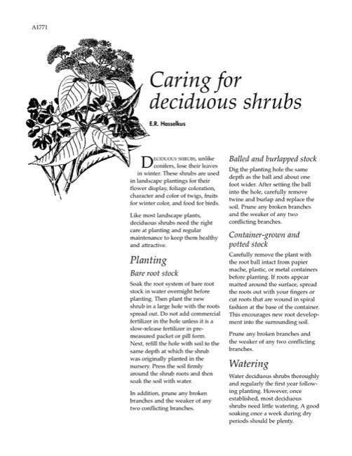 Caring for Deciduous Shrubs