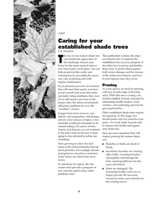 Caring for Your Established Shade Trees