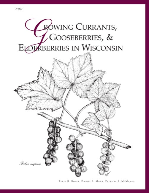 Growing Currants, Gooseberries, and Elderberries in Wisconsin