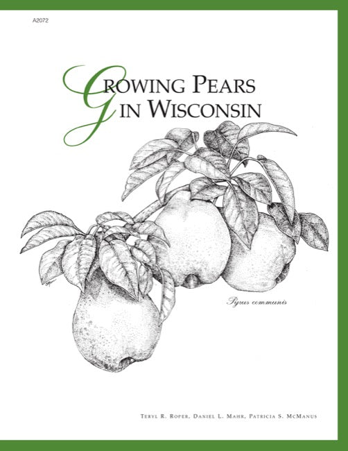 Growing Pears in Wisconsin