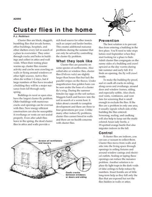 Cluster Flies in the Home