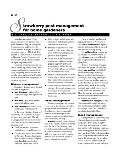 Strawberry Pest Management for Home Gardeners
