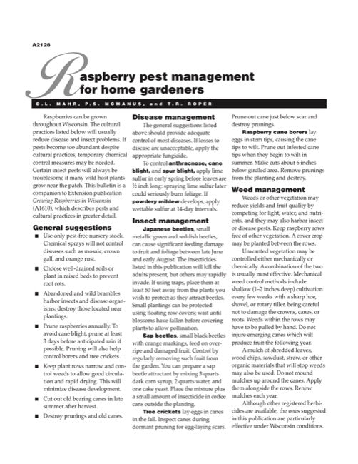 Raspberry Pest Management for Home Gardeners