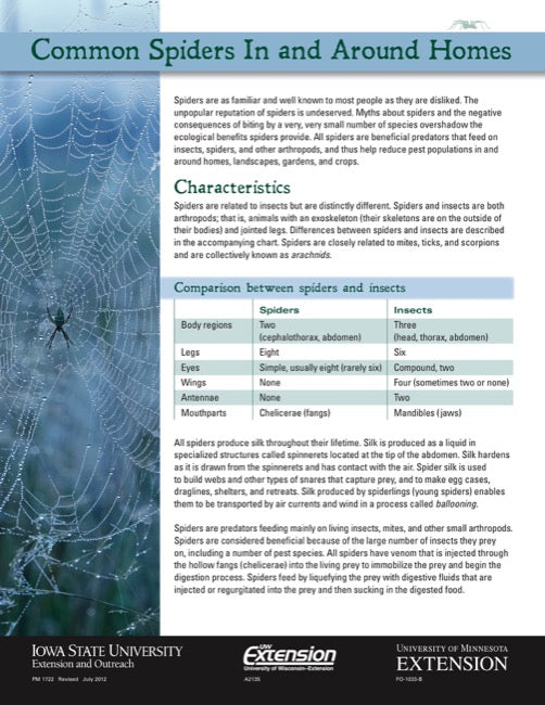 Common Spiders In and Around Homes
