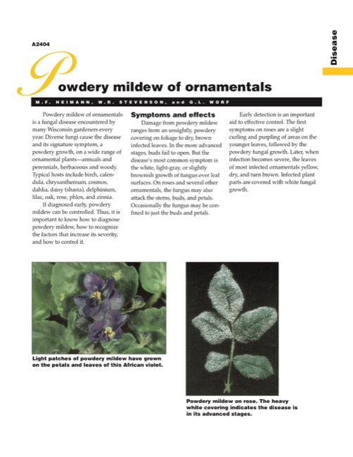 Powdery Mildew of Ornamentals