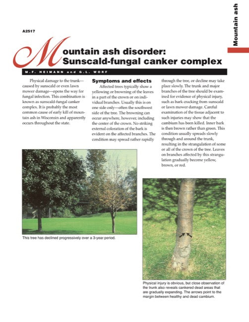 Mountain Ash Disorder: Sunscald-Fungal Canker Complex