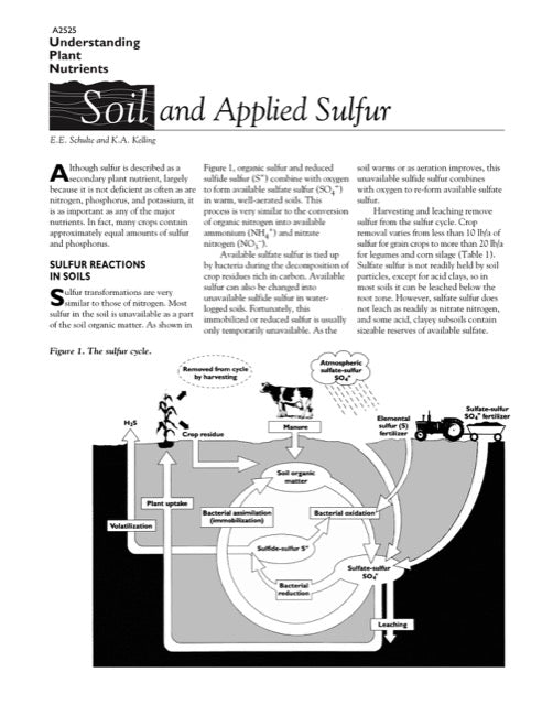 Understanding Plant Nutrients: Soil and Applied Sulfur