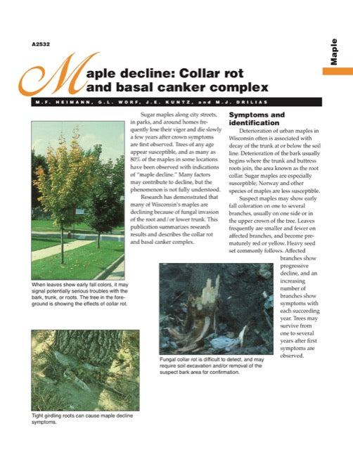 Maple Decline: Collar Rot and Basal Canker Complex
