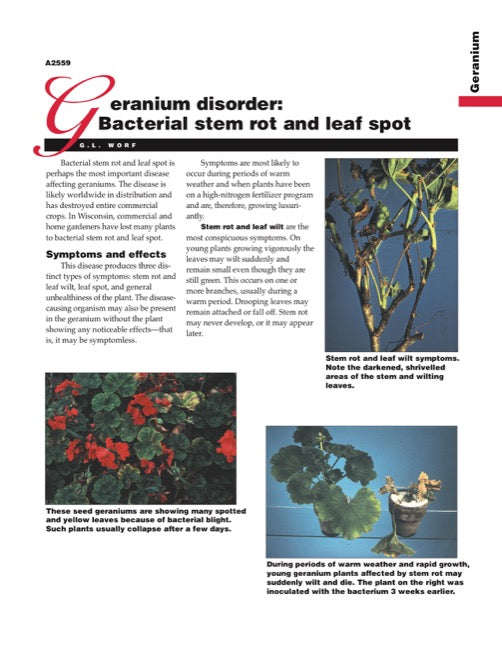 Geranium Disorder: Bacterial Stem Rot and Leaf Spot