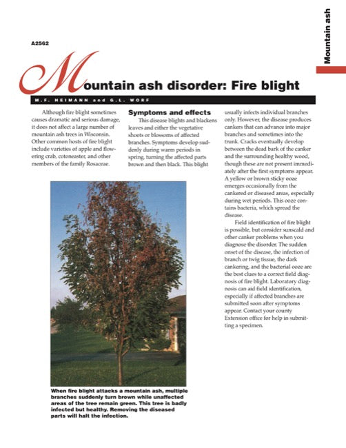 Mountain Ash Disorder: Fire Blight