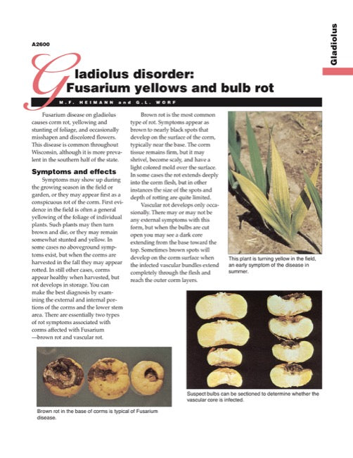 Gladiolus Disorder: Fusarium Yellows and Bulb Rot