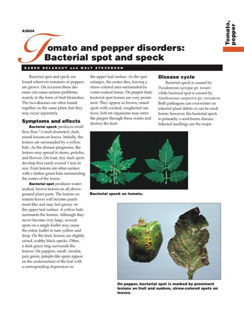 Tomato and Pepper Disorders: Bacterial Spot and Speck