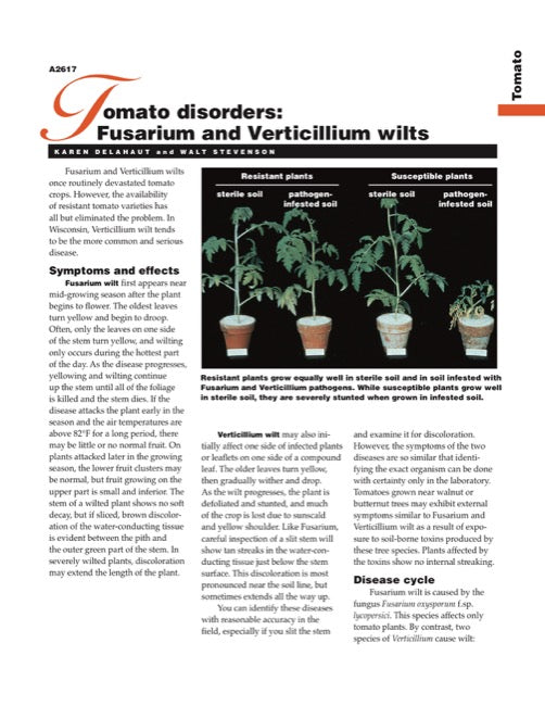 Tomato Disorders: Fusarium and Verticillium Wilts