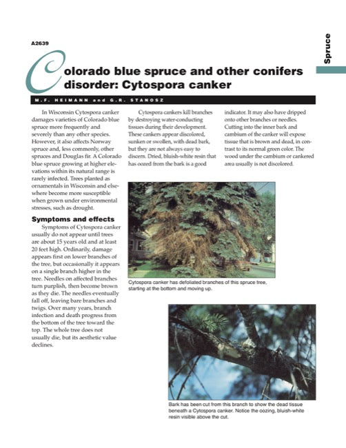 Colorado Blue Spruce and Other Conifers Disorder: Cytospora Canker