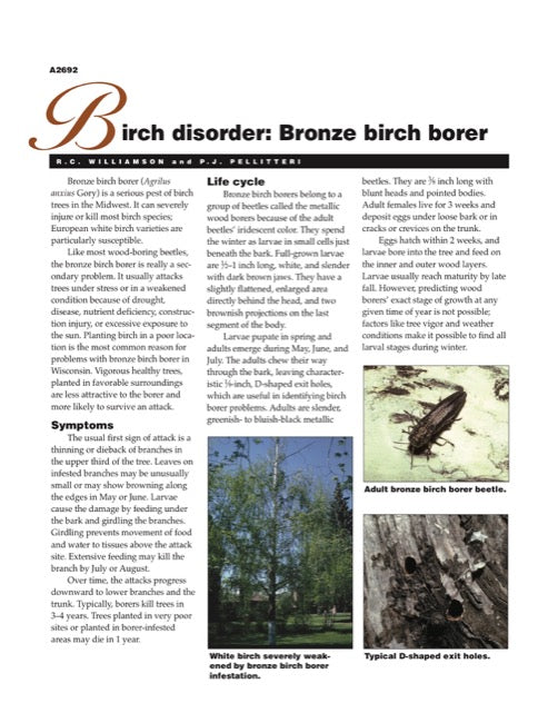 Birch Disorder: Bronze Birch Borer