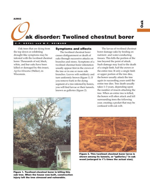 Oak Disorder: Twolined Chestnut Borer