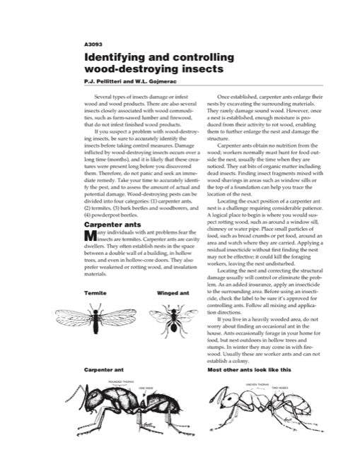 Identifying and Controlling Wood-Destroying Insects