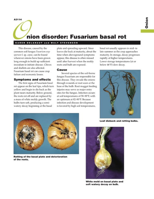Onion Disorder: Fusarium Basal Rot