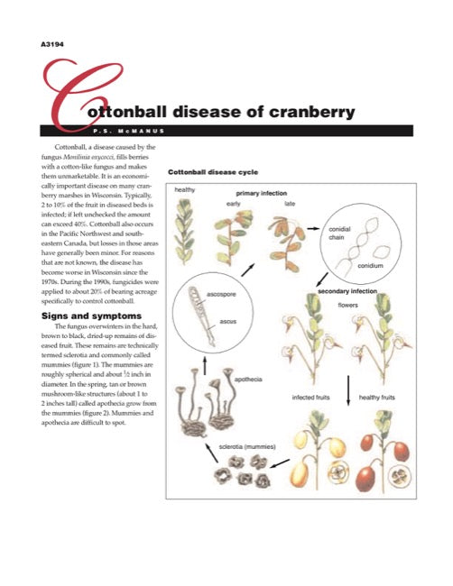 Cranberry Disorders: Cottonball Disease of Cranberry