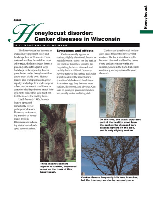 Honeylocust Disorder: Canker Diseases in Wisconsin