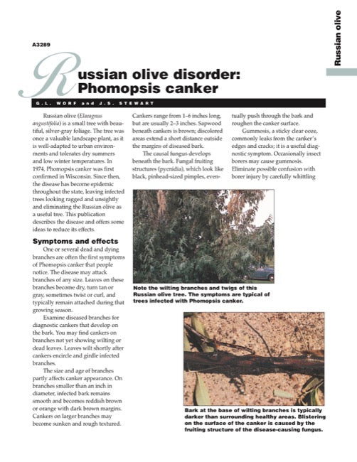 Russian Olive Disorder: Phomopsis Canker