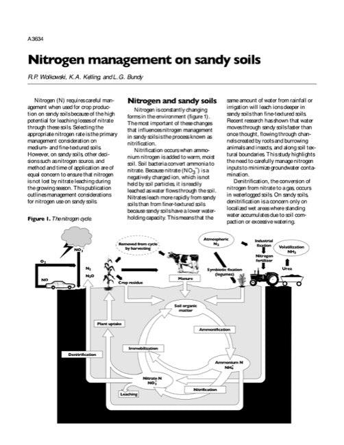 Nitrogen Management on Sandy Soils