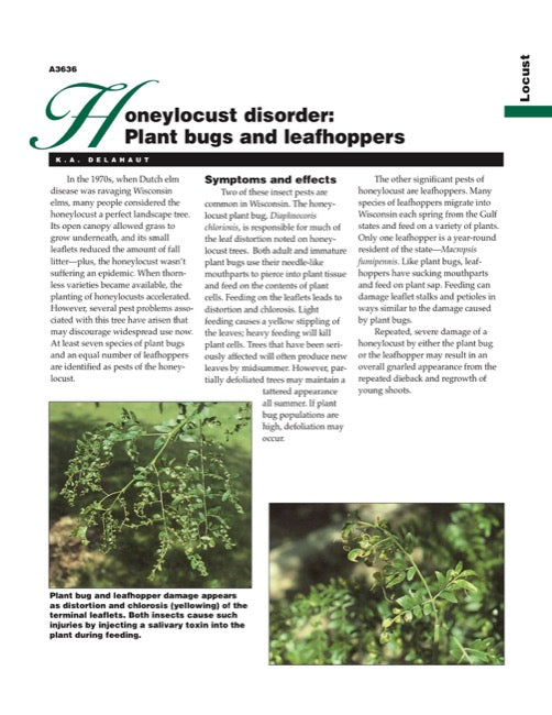 Honeylocust Disorder: Plantbugs and Leafhoppers