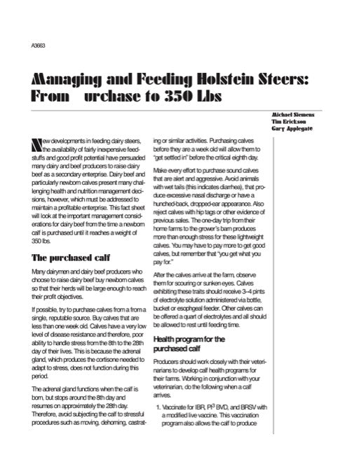 Managing and Feeding Holstein Steers: From Purchase to 350 Lbs