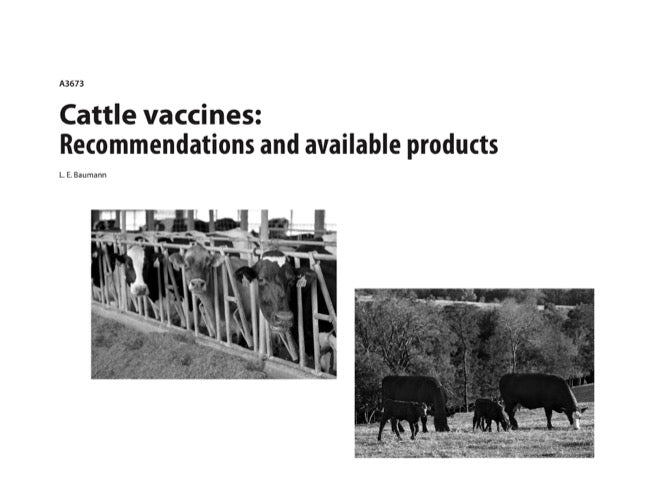 Cattle Vaccines: Recommendations and Available Products
