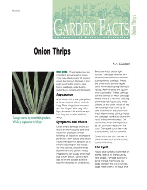 Onion Thrips
