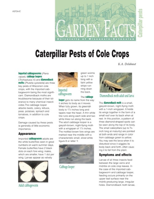 Caterpillar Pests of Cole Crops