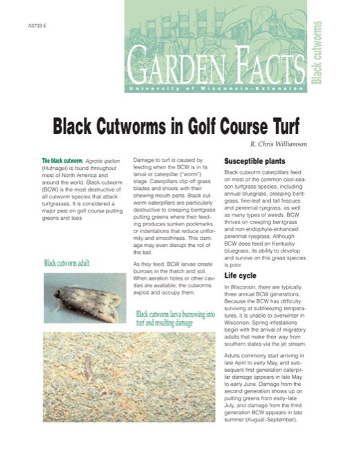 Black Cutworms in Golf Course Turf