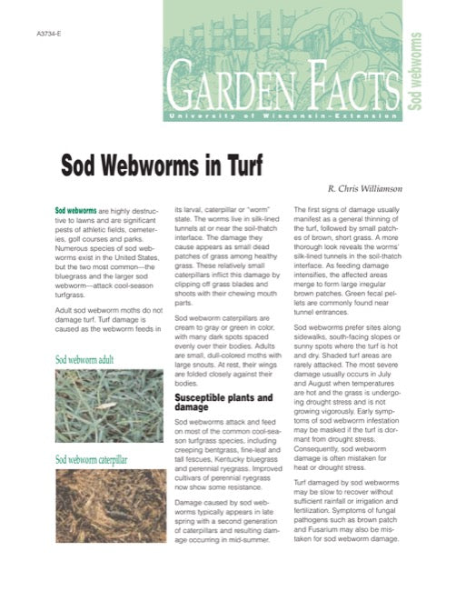Sod Webworms in Turf