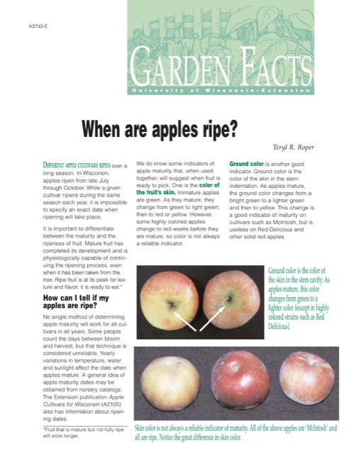 When Are Apples Ripe?