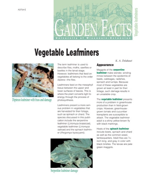 Vegetable Leafminers