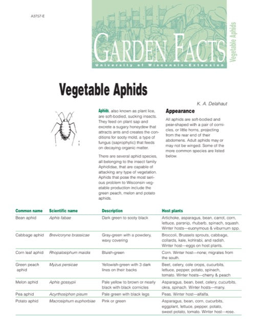 Vegetable Aphids