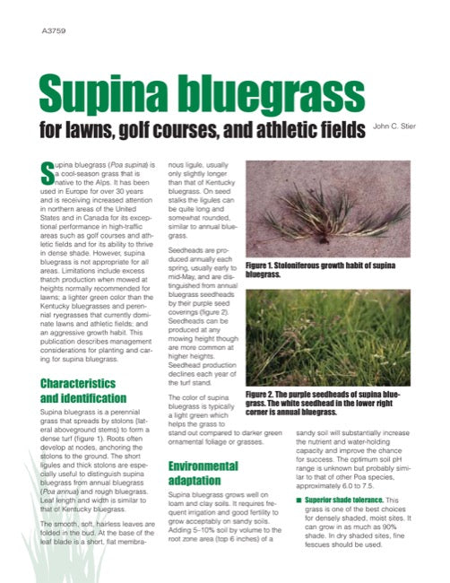 Supina Bluegrass for Lawns, Golf Courses, and Athletic Fields