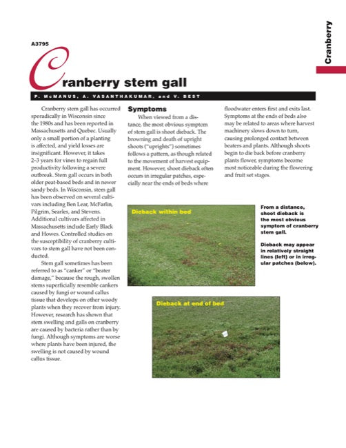 Cranberry Disorders: Cranberry Stem Gall