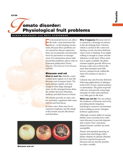Tomato Disorder: Physiological Fruit Problems