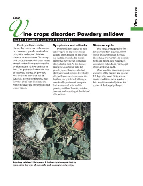 Vine Crops Disorder: Powdery Mildew