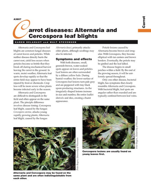 Carrot Diseases: Alternaria and Cercospora Leaf Blights