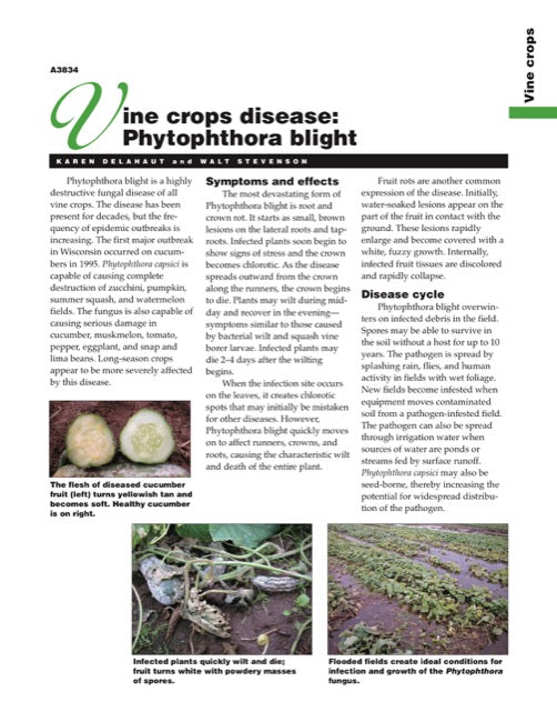 Vine Crops Disease: Phytophthora Blight