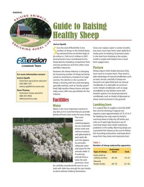 Guide to Raising Healthy Sheep