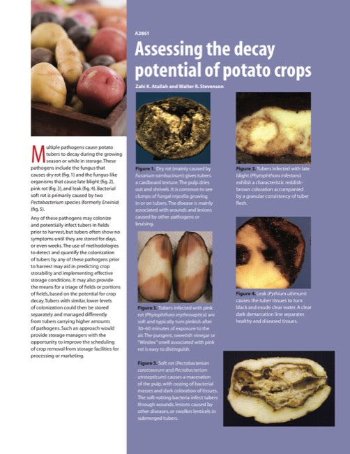 Assessing the Decay Potential of Potato Crops