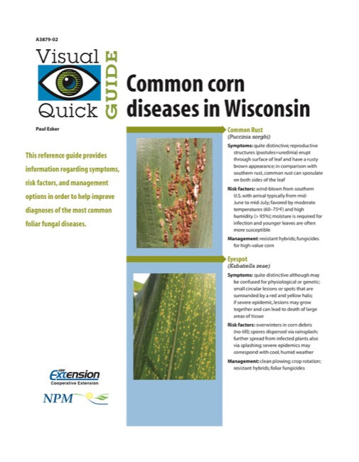 Visual Quick Guide to Common Corn Diseases in Wisconsin