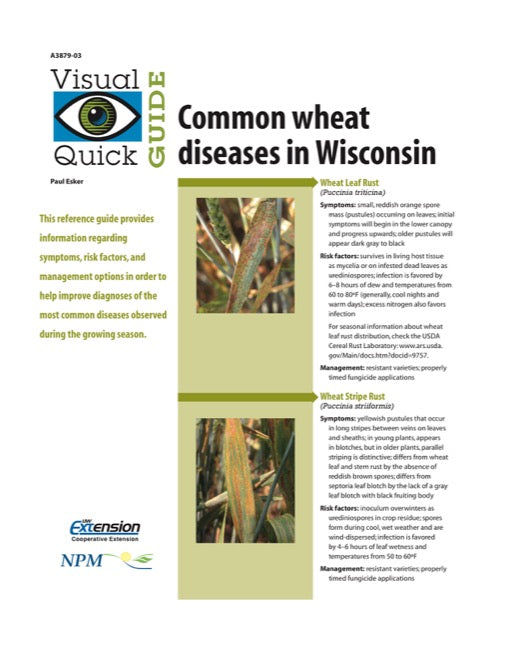 Visual Quick Guide to Common Wheat Diseases in Wisconsin